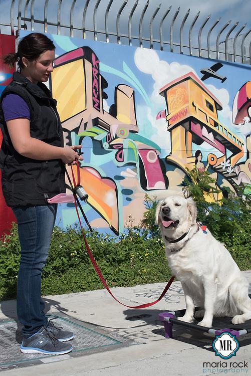 South Florida premier dog trainer, Cadence K-9 on location [photo credit @mrockphoto]