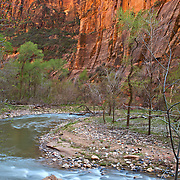 Light reflects off narrow canyon walls along Riverside Walk trail deep in the heart of Zion National Park. Designated in 1919, Zion is Utah's oldest national park. The park is known for its incredible canyons, including The Narrows, which attract canyoneers from around the world.