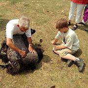 Schaapscheerdersfeest schaapskooi de Tafelberg Blaricum