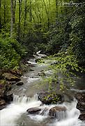 Keeney's Creek