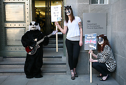 © Licensed to London News Pictures 01/05/2013.Protesters dressed as badgers, from Team Badger, demonstrate outside DEFRA against the cull of badgers..London, UK.Photo: Anna Branthwaite/LNP