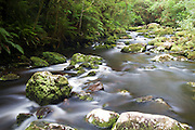 The Tautuku River below McLean Falls in The Catlins, New Zealand.