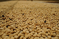 Columbia Coffee Farm<br /> Bird Friendly<br /> Rainforest Alliance Certified