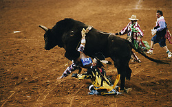 Cowboy fallling from a bull
