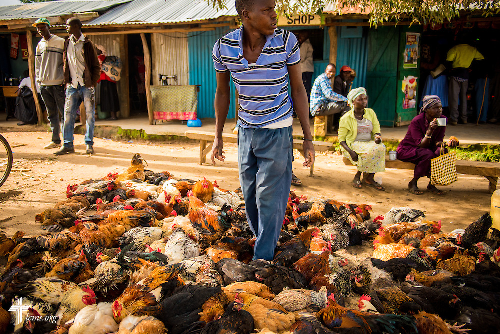 A man steps between roosters and hens for sale at a marketplace in Chepareria, Kenya, near the U-Dom ELCK (Evangelical Lutheran Church in Kenya) Project 24 site on Thursday, June 23, 2016. LCMS Communications/Erik M. Lunsford