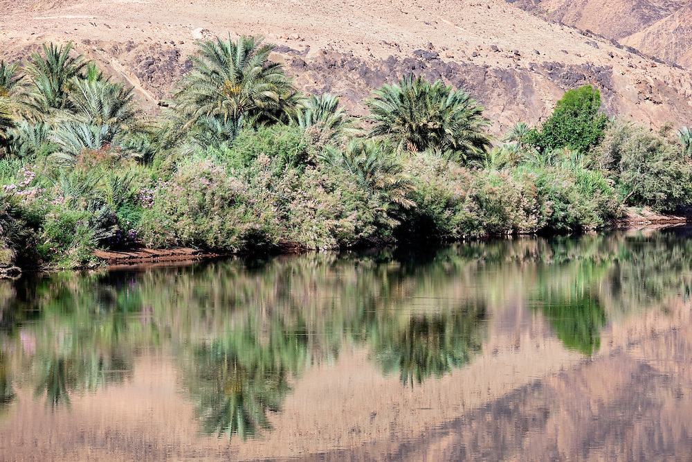 Date palms and bushes of oleander with water reflections at the Draa River in the Draa Valley, Morocco.