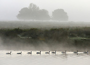 © Licensed to London News Pictures. 14/10/2012. Richmond, UK Canadian Geese form a line as they pass across a lake. Early morning mist and sunshine in Richmond Park, Surrey, today 14th October 2012. Photo credit : Stephen Simpson/LNP