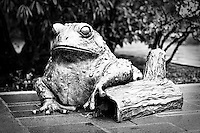 Bronze frog statue at Bellevue Botanical Gardens - closeup bw