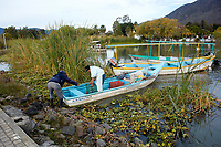 Fisherman landing his catch of Tilapia from a fishing boat in Lake Chapala, Chapala, Jocotopec, Jalisco, Mexico
