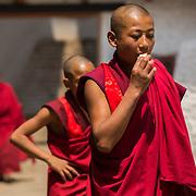 Monks inside the Punakha Dzong, Punakha, Bhutan