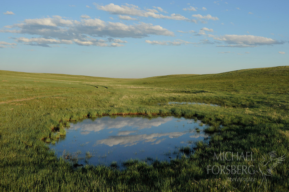 Heavy rains fill a buffalo wallow-size depression that serves as a breeding ground for amphibians.  These shallow, rain-filled depressions quickly bring to life dormant ecosystems.  When the water dries up, the ecosystems go on hiatus - for weeks, months, or even years.  Larimer County, Colordao