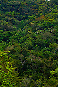 Nova Lima_MG, Brasil..Estacao Ecologica dos Fechos em Nova Lima, Minas Gerais...Ecological Station of Fechos in Nova Lima, Minas Gerais...Foto: JOAO MARCOS ROSA / NITRO.