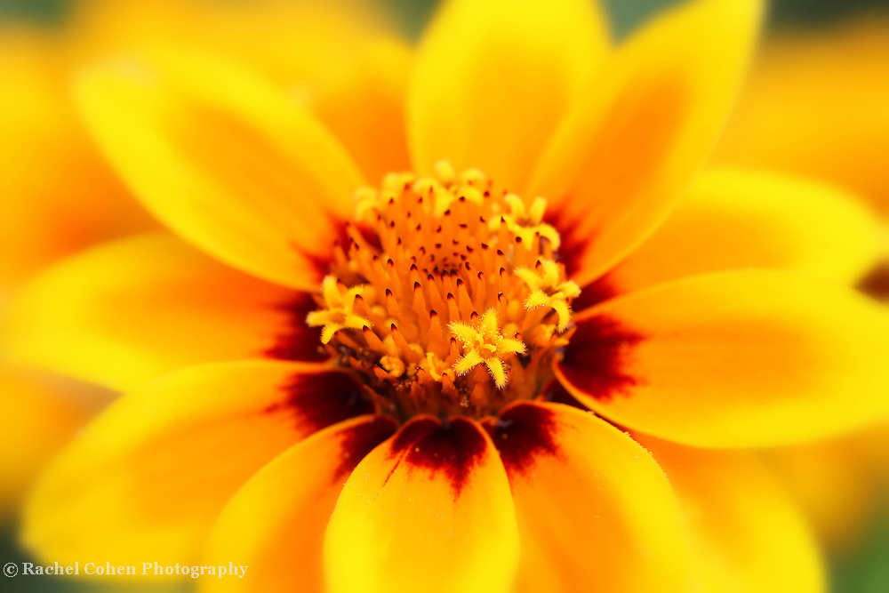 &quot;Certainty&quot;<br />