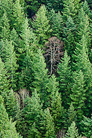 Looking down on a forested mountainside in Western Washington, USA.