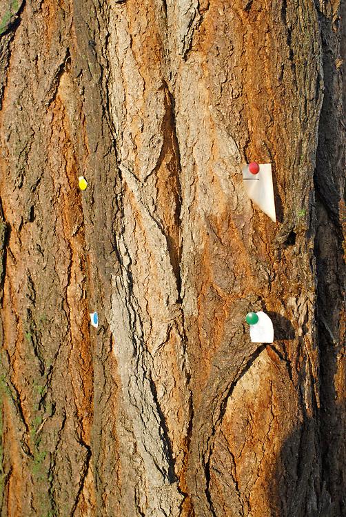 Abgerissener Zettel an einem Baum der mit Reisszwecken befestigt war |