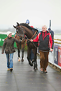 Navan Races, Saturday 27th February 2016.<br /> Owner / Trainer, Nigel Carolan leads Last Garrison before the 1st Race at Navan<br /> Photo: David Mullen /www.cyberimages.net / 2016