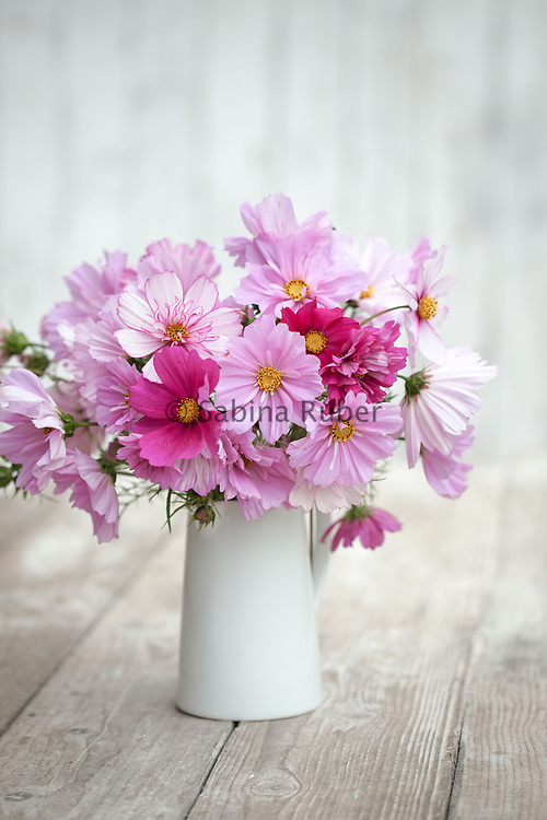 Flower arrangement with Cosmos bipinnatus 'Psyche Mixed', 'Dazzler', 'Fizzy Rose Picotee' and 'Double Cranberries'