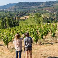 Analemma Wines in Mosier, Oregon