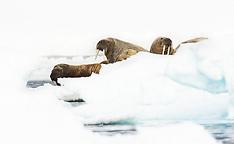 Svalbard #24 2015