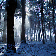 Sunlight shines down through the forest, as a heavy blanket of residual snow comes down in the breeze.
