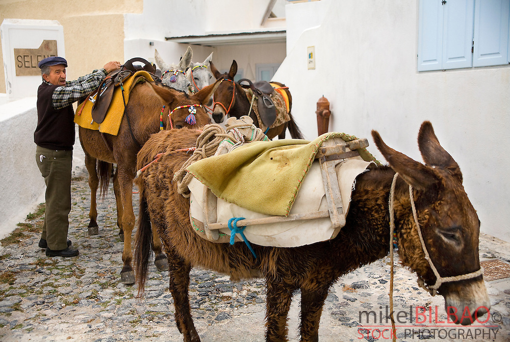 Man and donkeys.<br /> Fira village. Santorini island, Cyclades islands, Aegean Sea, Greece, Europe.