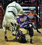 Bull Smooth Operator strikes cowboy Robson Palermo as rodeo clowns come to his rescue during the PBR World Finals.