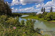 Wild roses and red barn along the Whitefish River in the Flathead Valley, Montana, USA