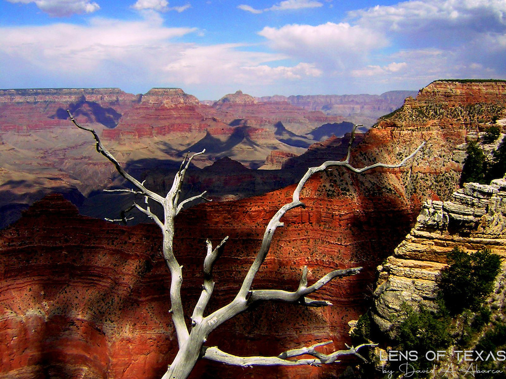 This dead tree was just below the overlook at the Grand Canyon and the stark contrast between the vivid colors of the canyon and the grays of the tree were mesmerizing.