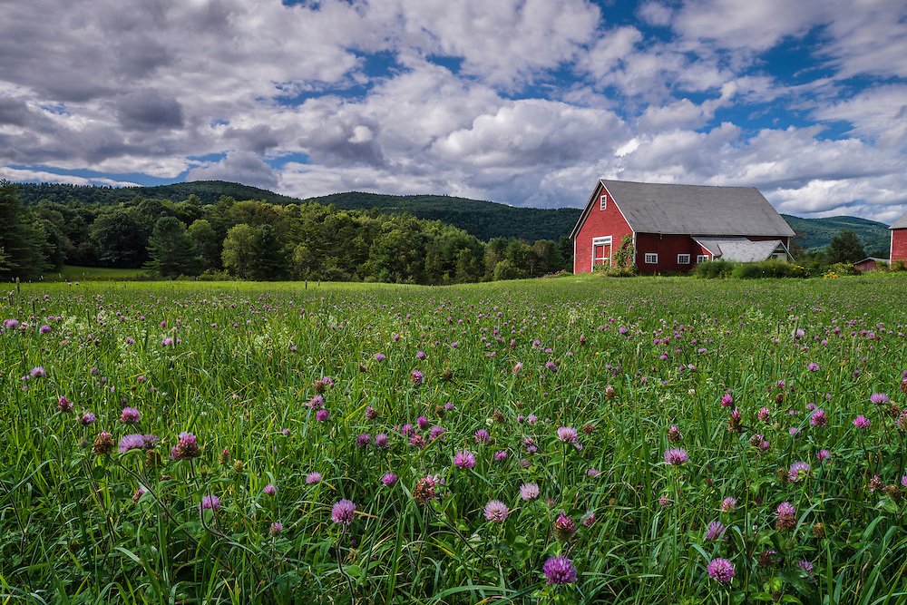 Clover flowers and grassy field with red barn & view to summer hillsides, Lyme, NH