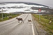 Rein i vegen, og rein på vegen. Skaidi i Finnmark. På slutten av det 20. århundre ble det offentliggjort planer om utbygging av Skaidivassdraget, som om utbyggingen ble utført ville medført at betydelig større arealer enn i Altautbyggingen ble demt ned, dessuten ville flere faste trekkveier for rein blitt brutt. Reineierne protesterte like sterkt som mot Altautbyggingen, men mediadekningen var mindre og naturvernerne engasjerte seg ikke i spørsmålet om utbygging av Skaidivassdraget. Utbyggingen ble utsatt.<br /> <br /> Statens vegvesens vegtrafikksentral lå i Skaidi inntil den ble flyttet til Mosjøen i 2003.
