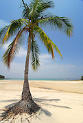 Palm tree at the beach in Chapera Island. Las Perlas archipelago, Panama province, Panama, Central America.