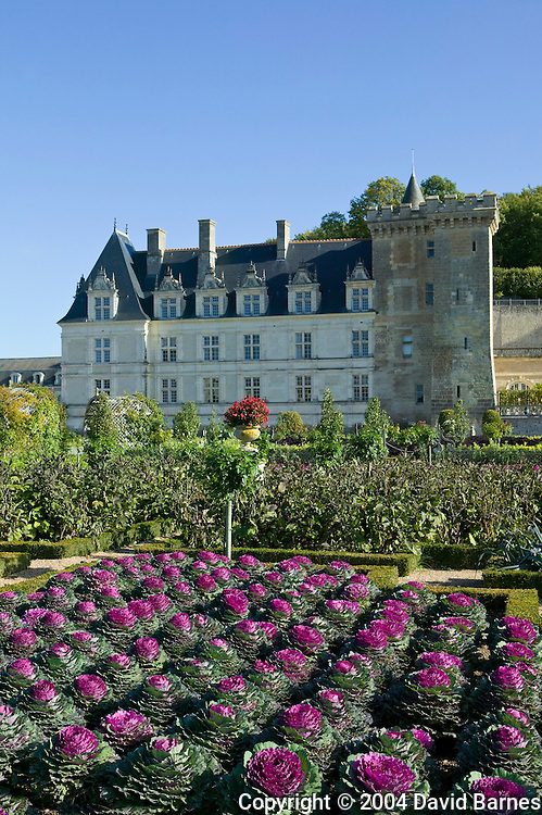 Garden at the Chateau of Villandry in autumn, Indre-et-Loire, Loire Valley, France