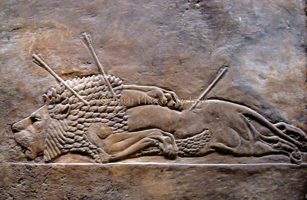 Nineveh ancient city of Assyria, near modern-day Mosul, in the Ninawa Governorate of Iraq. Relief from the palace showing a lion hunted to death. 2nd millennium BC