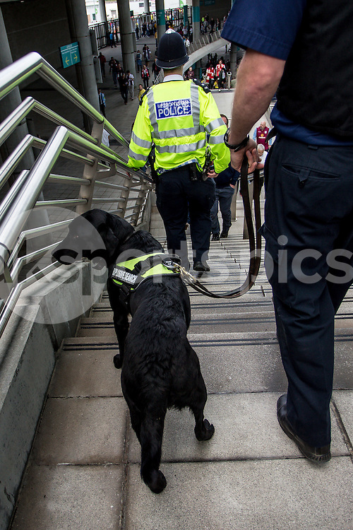 Explosive search dog hard at work prior to during the The FA Cup Final match between Arsenal and Aston Villa at Wembley Stadium, London, England on 30 May 2015. Photo by Liam McAvoy.