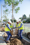 Cool Planet Tree Planting TO Oct 2014