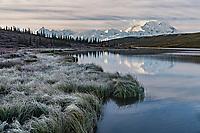 Sunrise on Denali; Wonder Lake reflection; sedges in shadow still bear frost; autumn; Denali National Park; Alaska