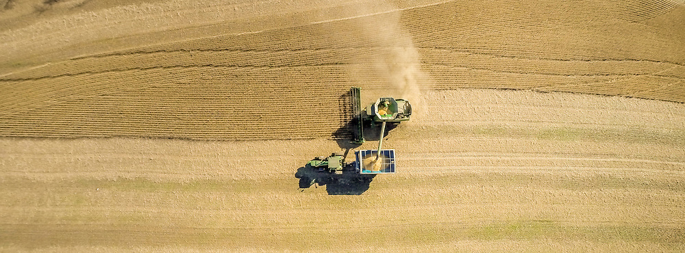 Aerial of combine harvesting soybeans in a field near Jarrettsville, Maryland, USA