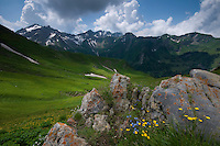 Ranunculus breyninus; Buttercup; Alpine  forget-me-not; Myosotis alpestris; In background the Grauspitz; highest mountain Liechtenstein;