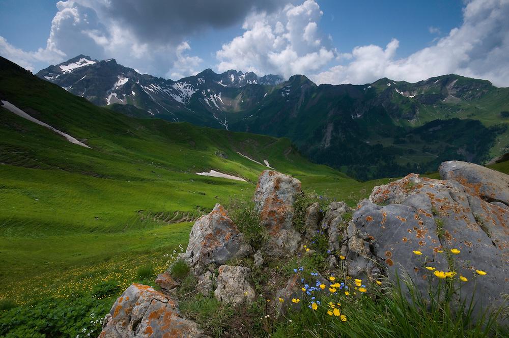 Ranunculus breyninus; Buttercup; Alpine  forget-me-not; Myosotis alpestris; In background the Grauspitz; highest mountain Liechtenstein;