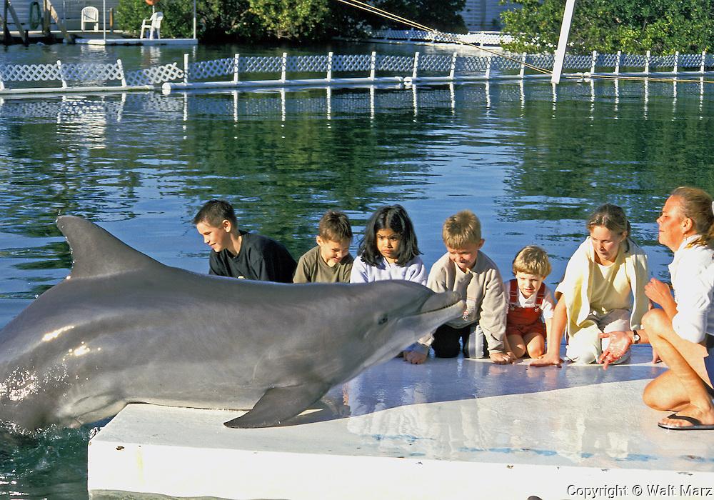 Trainer has Dolphin climb on dock to greet kids. Theater of the Sea, Islemorida Key, Florida