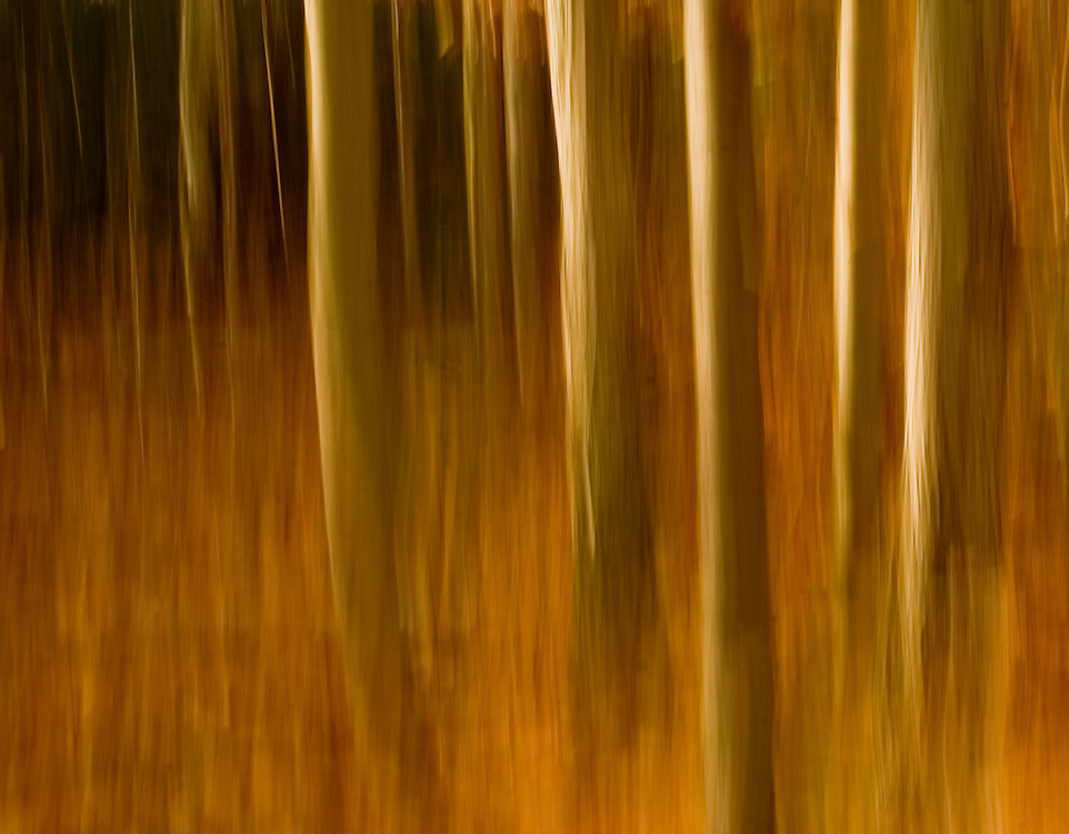 Photograph of trees in fall colors in the Adirondacks using panning motion and slow exposure to create painterly,impressionistic image