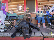 Yorick the great Dane takes a break as others listen to Gary Ziegler during the Wet Mountain Western Pilgrimage at Bear Basin Ranch.