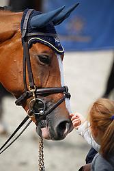 Liefhebber's Wildcard<br /> KWPN Paardendagen Ermelo 2010<br /> © Dirk Caremans