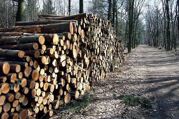 Nederland, Nijmegen, 27-3-2006..Een medewerker van een houtkapbedrijf is bezig met onderhoud aan het bos heumensoord. Het wordt uitgedund zodat er weer lucht en licht komt voor andere vegetatie, bomen. Het hout wordt gebruikt in de houtvezel industrie, spaanplaat, en voor pallets...De gemeente Nijmegen overweegt het 500 hectare grote natuurgebied, bos, te verkopen aan natuurmonumenten. Het waterwingebied dat grenst aan het zuiden van de stad zou dan onderdeel worden van andere natuurgebieden en tot in Duitsland, Reichswald, kunnen lopen. De opbrengst kan gebruikt worden om het groen in de stad te onderhouden, en het landschap in de Ooijpolder te versterken. Het onderhoud zou dan ook niet meer ten laste van de gemeente komen...Foto: Flip Franssen/Hollandse Hoogte