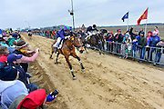 Nederland, Sambeek, 3-3-2014 Bij Boxmeer, tussen Sambeek en Vortum Mullum, wordt voor de 274e keer de Metworstren gehouden. Deze paardenrace voor vrijgezelle ruiters uit Boxmeer vindt altijd plaats op carnavalsmaandag. Steeds rijden drie paarden met lokale ruiters een race van 750 m. op de met zand bedekte weg. Hierna volgt de Knollenrace, een wedstrijd tussen werkpaarden. Daarna de finale, de koningsrit, de winnaar hiervan levert de koningsruiter eeuwige roem op. Winnaar werd Peter Jansen, met de paars-groene cap. In 1740 sloeg de koets van een adelvrouw hier op hol, waarna toevallig op het land rijdende, ongehuwde ruiters voor haar redding zorgden. Als beloning kregen deze een grote metworst, twee broden, twee vaten bier en een halve varkenskop. Foto: Flip Franssen/Hollandse Hoogte