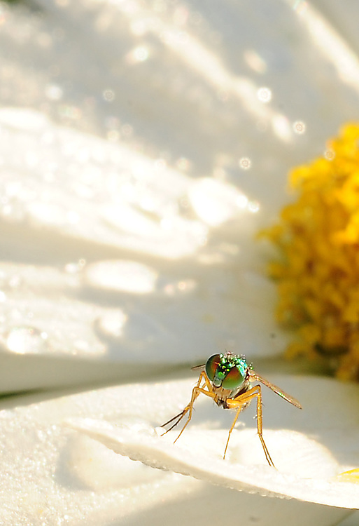 Fly on a flower