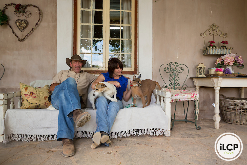 Wallie Nigrini and his wife Janine sitting on the porch of their home in company of one of their dog and Noodle, their tamed female caracal (Caracal caracal) Near Prince Albert, Western Cape, South Africa Renosterkop farm / Wallie, Janine, leur Jack Russell et Noodle le caracal apprivoisé forment une drôle de famille !