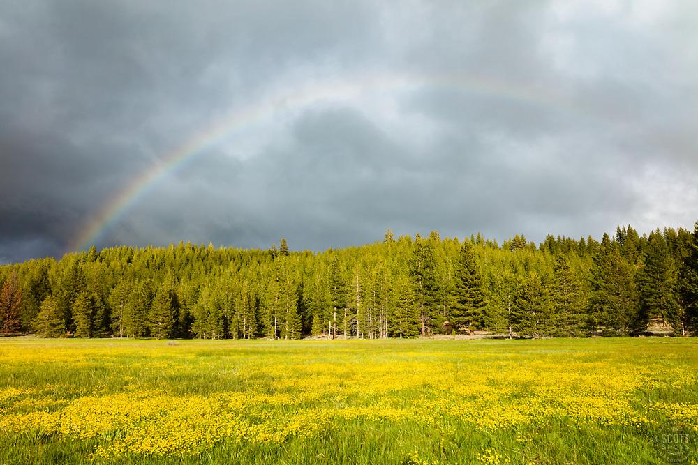 """Rainbow Over Sagehen Meadows 1"" - Photograph of a rainbow over a field of Buttercup wildflowers at Sagehen Meadows, near Truckee, California."