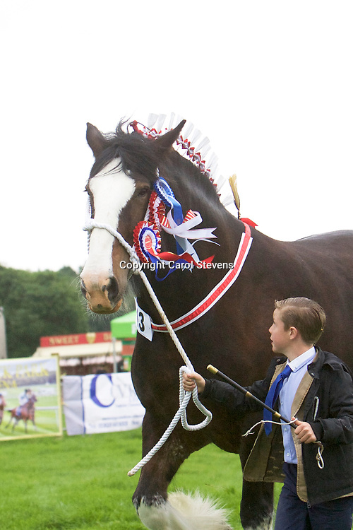 Martin Fountain's WOODHOUSE CALENDAR GIRL with Will Fountain<br /> Supreme Shire Show Champion