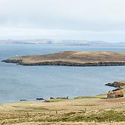 Nordic Vision Shetland 1920
